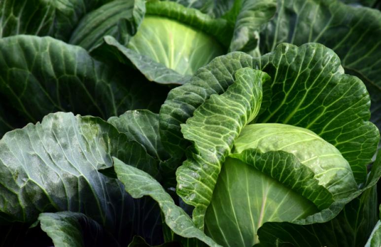 Everyday superfood: sauerkraut