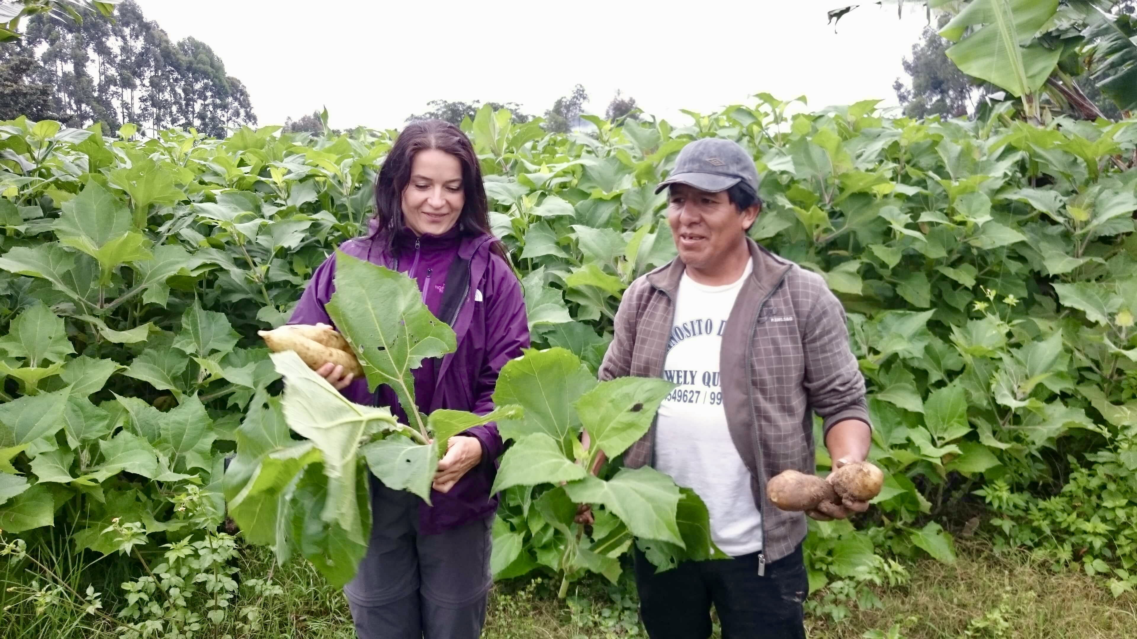 Tereza Havrlandova - Lifefood founder - at the yacon farm in Peru