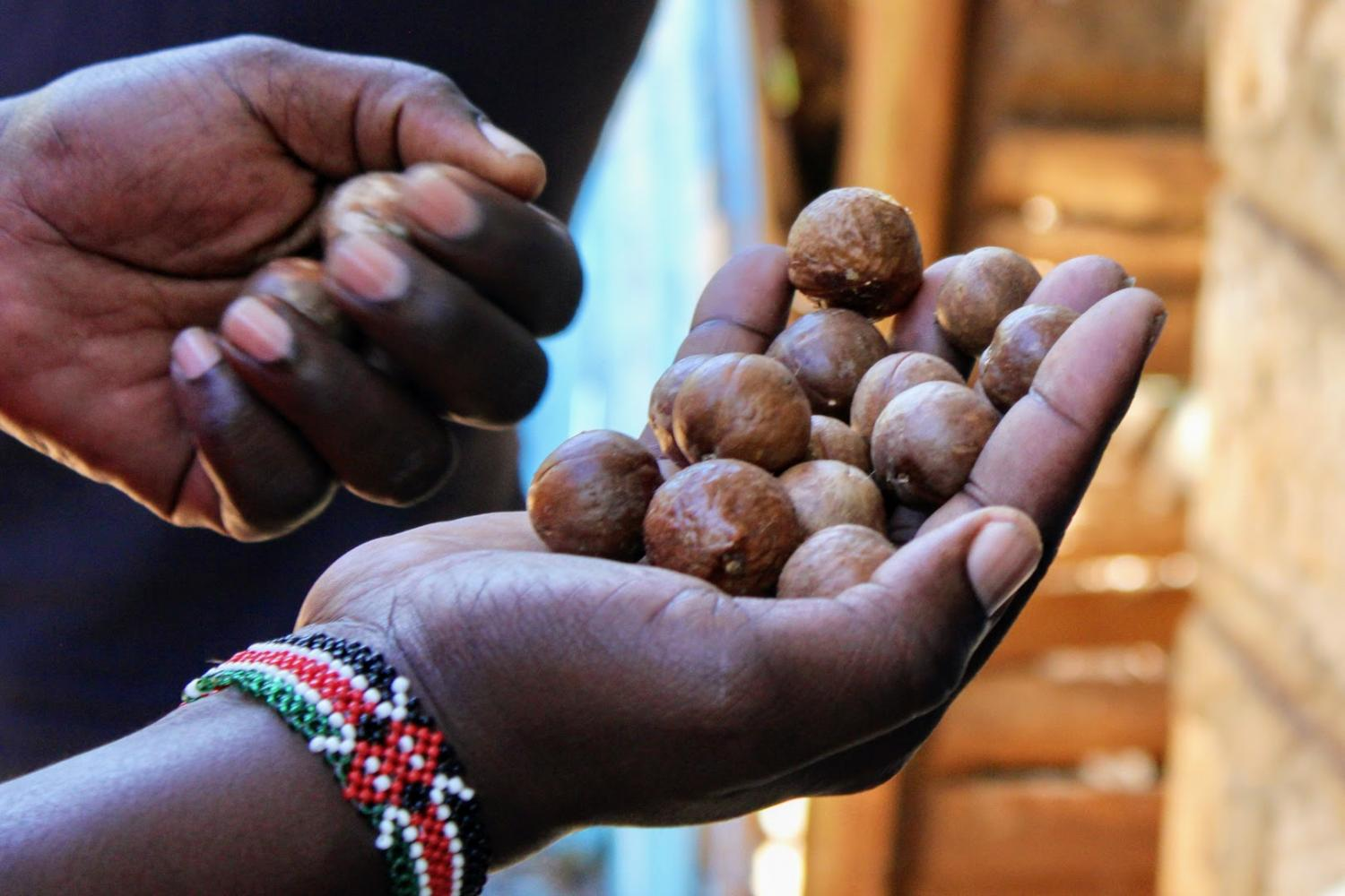 Let's visit Kenya, where macadamia nuts are grown for you with care and in harmony with nature and its inhabitants.