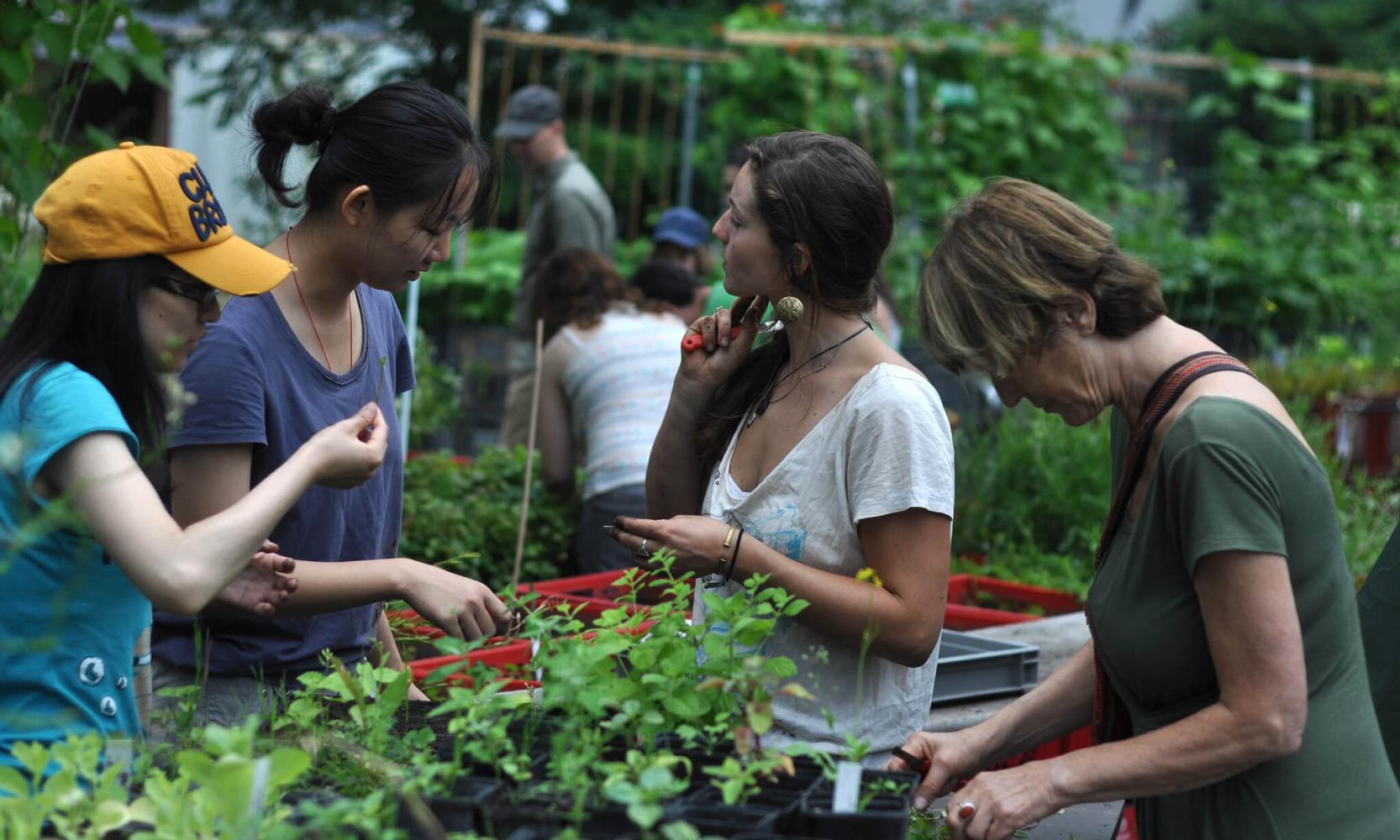 Pflanzen selber anbauen