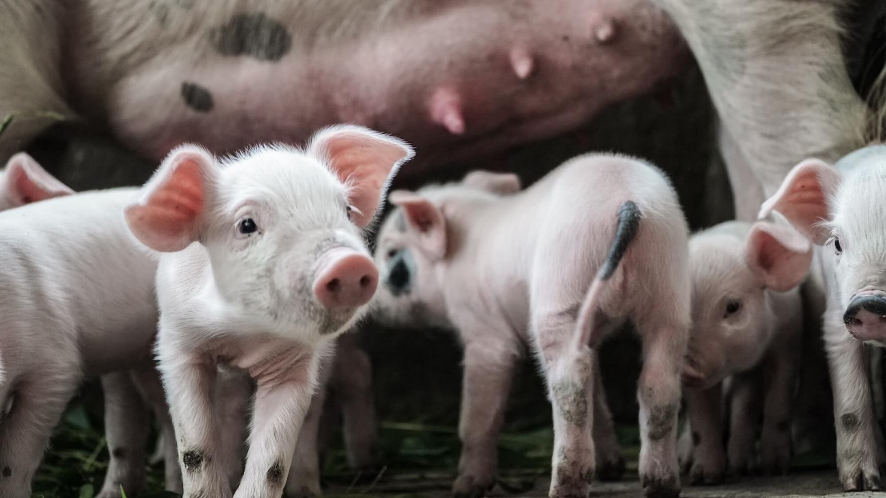 Veganisme vanuit een ethisch perspectief