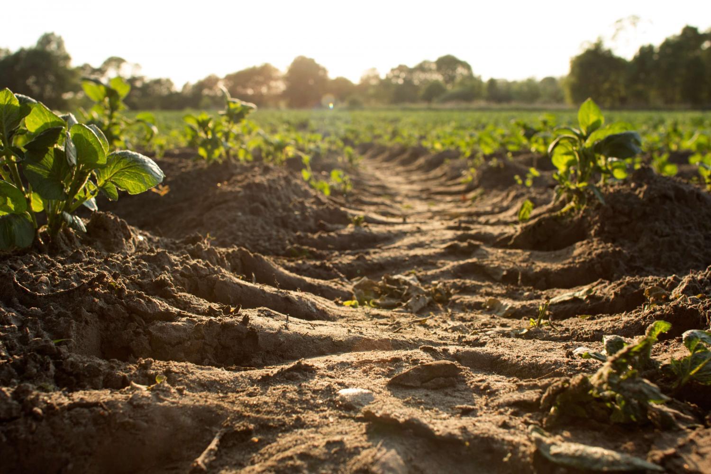 Těžkou technikou zdusaná zem nerodí přirozeně, používá se hlavně jako