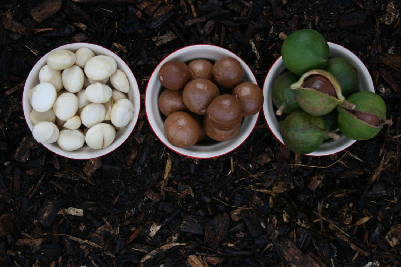 Macadamia Nüsse Anbau biologisch