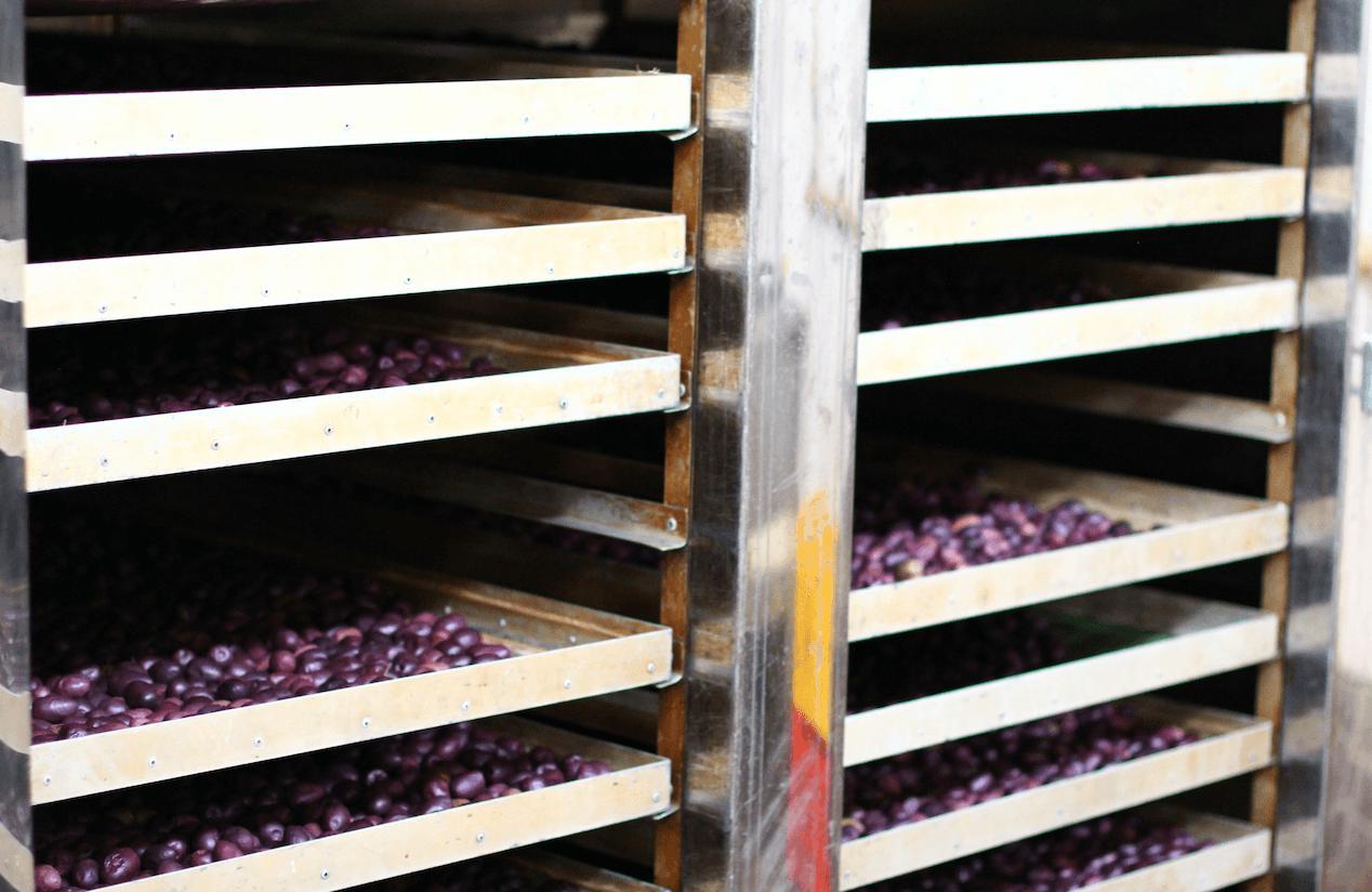 Du möchtest wissen, woher die rohen Oliven von Lifefood kommen?