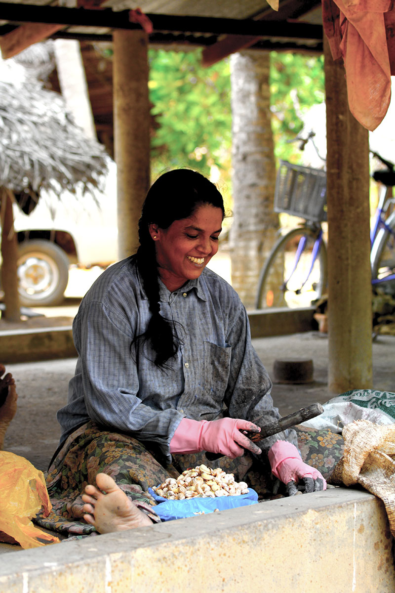 Cashew farm