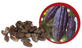 http://www.lifefood.eu/tl_files/data/nl/blog/2015/Chocolade artikel/cacao-beans-e015663f.jpg